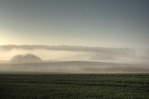 Mosebryg ligger som en tæt tåge over markerne. Foto: Colourbox.