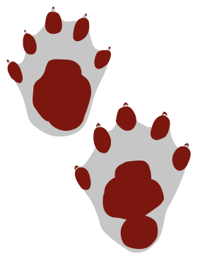 Odderens spor har 5 tæer, forbundet med svømmehud. Forpotens spor er næsten rundt med en diameter på ca. 6 cm. Bagpoten er ca. 6-9 cm afhængigt af, hvor stor del af fodsålen, den træder på. Mærker efter kløerne er små.